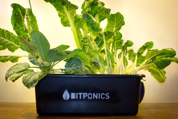"""Your reward for a $100 pledge: a """"water culture"""" hydroponic system."""