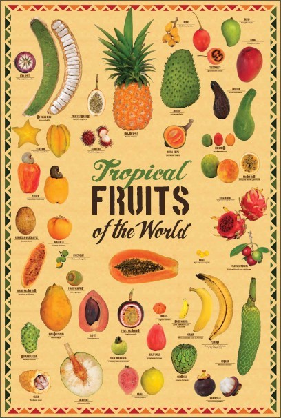 """Tropical Fruits of the World poster 19.38"""" X 29"""" ( W x H )"""