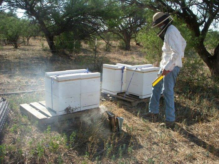 Newly established beeyard at Deep Dirt Farm Institute, Patagonia, AZ