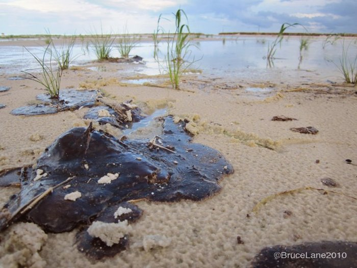 A graphic reminder of the oil on the Gulf coast, the oil that remains offshore and the oil that will remain in the marshes.