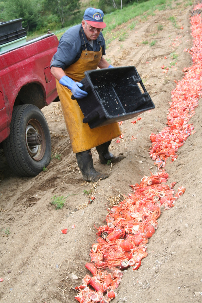 Jodie pouring lobster shells into the fields