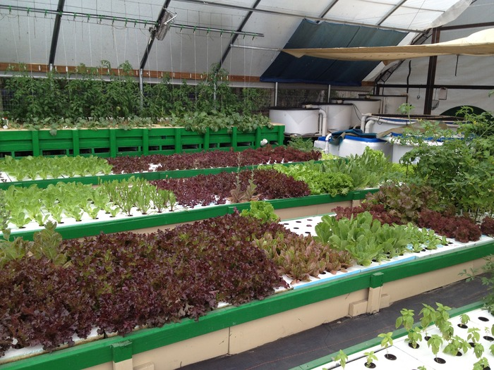 Growing Food at the GrowHaus with Commercial Aquaponics