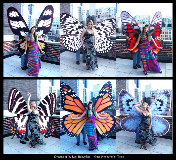 Test photos for our 6 of our 8 final wings - once fully assembled, these will be worn by our 8 Butterfly Queens.  Each butterfly wing is photo-realistic on both sides to their individual species!