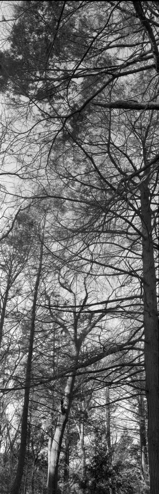 Arnold Arboretum 2009