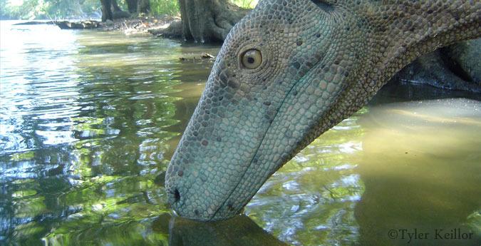 A not lame Herrerasaurus!