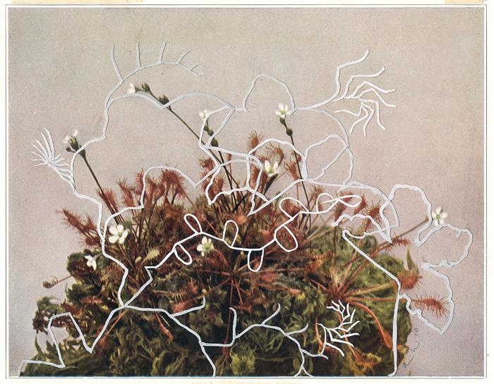 "Alexis Mackenzie's delicate collage ""Cyclic I""."