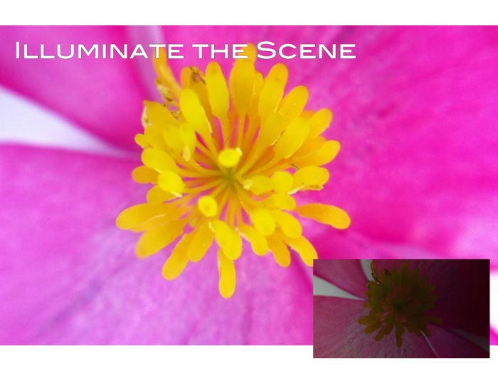 Brighten things up using the Light Lens (without Light Lens, bottom right)
