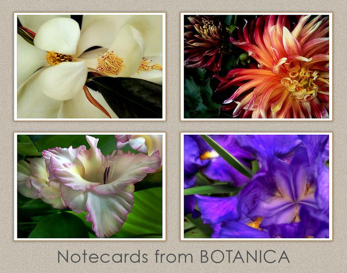 The four notecard covers with images from BOTANICA.