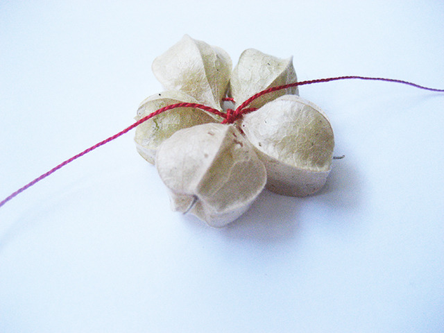 #58 - 10 of 10 - Aunt Molly's Ground Cherry No. 2