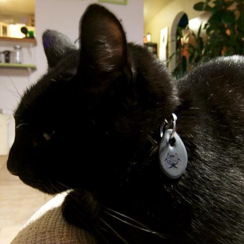 CAT BLING I - $15 / MADE IN USA BUNDLE I ($7 cheaper!)