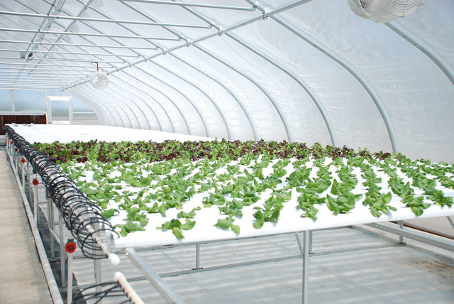 This is an example of the hydroponic system we will build. Photo courtesy of AmHydro.com