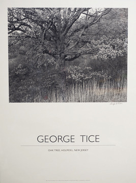 Oak Tree poster,19x25 printed in duotone,signed by George Tice