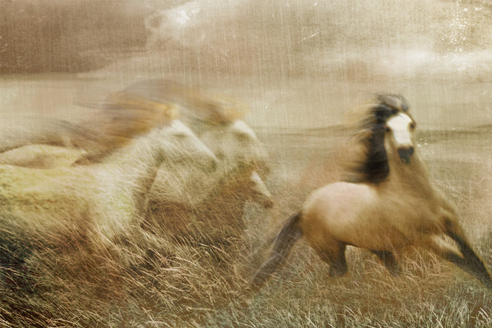 Fine Art Print - Traveler & His Family - From Wild Horses & Renegades