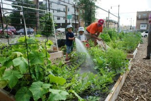 Everyone learns to grow food at Global!