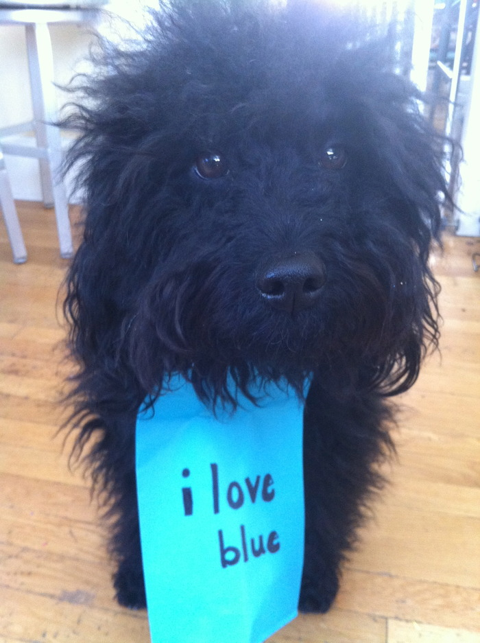 I LOVE BLUE PHOTO BY GAIL ERDOS