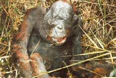 the demand for palm oil results in disgusting cruelty to animals