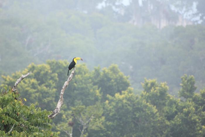 The morning of December 21st, 2012.  Tikal, Guatemala.
