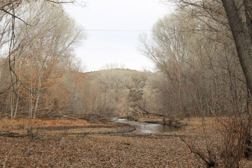 The cottonwoods and creek on the property