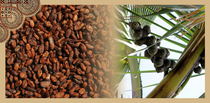 Cacao and the Palmyra Palm - our healthy source of sweetness