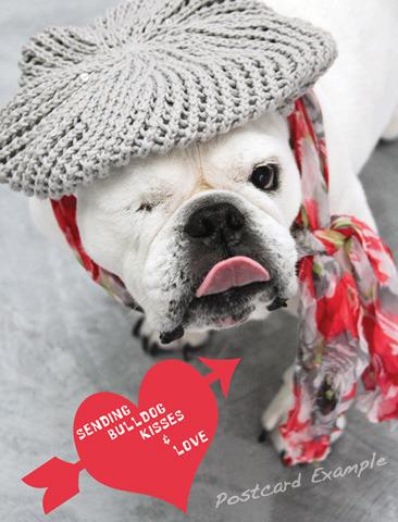 Bulldog Kisses Postcard