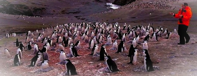 Tackling climate change, one penguin at a time