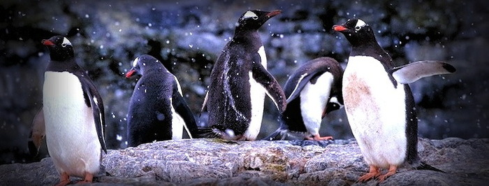 Penguins are on the move!