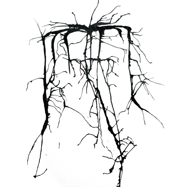 Root Love, by Maria Pinto
