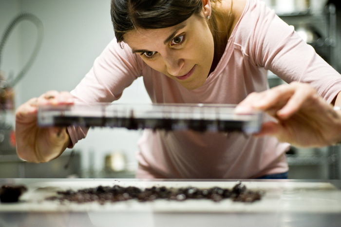 Click to view slideshow on making chocolate