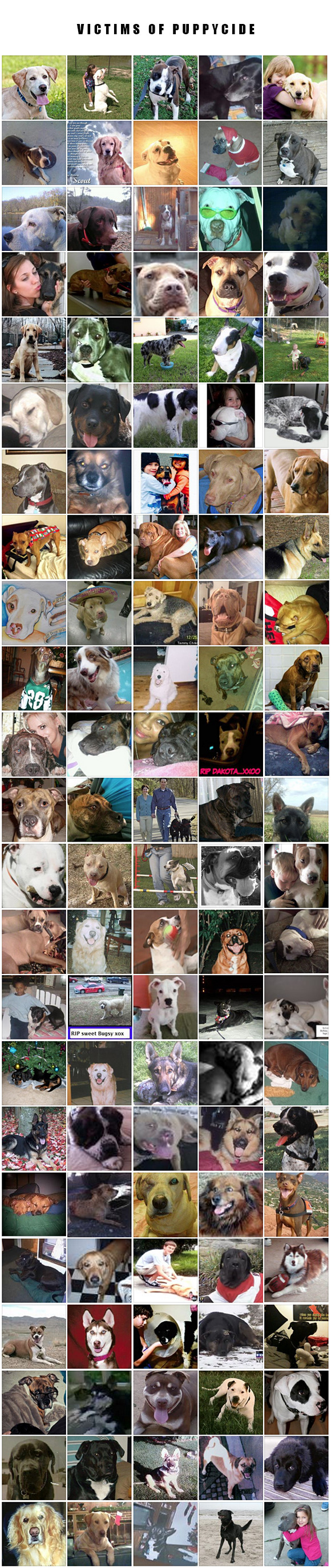 """Image courtesy of the """"Dogs Shot by Police"""" facebook page."""
