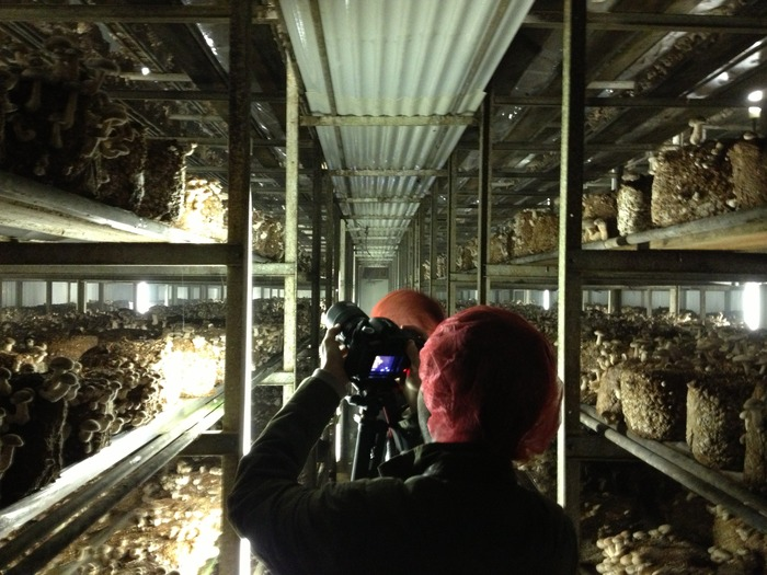 On location filming Episode One at Phillips Mushroom Farms