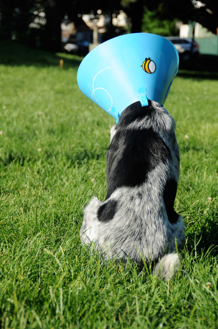 You can see our first medium Daisy Cone prototype above in the photo with Silver the dog.