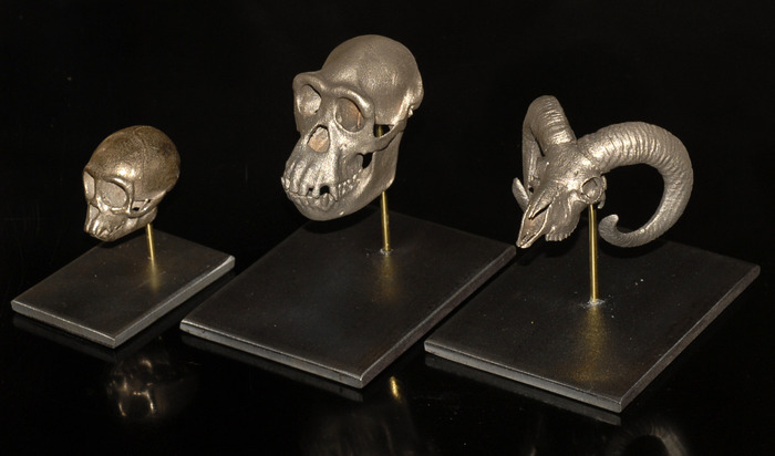 Stainless Steel Skulls on Metal Display Mounts