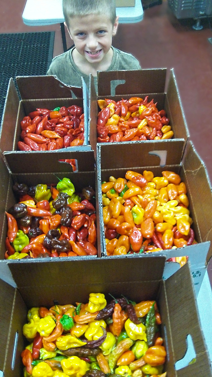 One afternoon's worth of pepper picking. One happy picker!