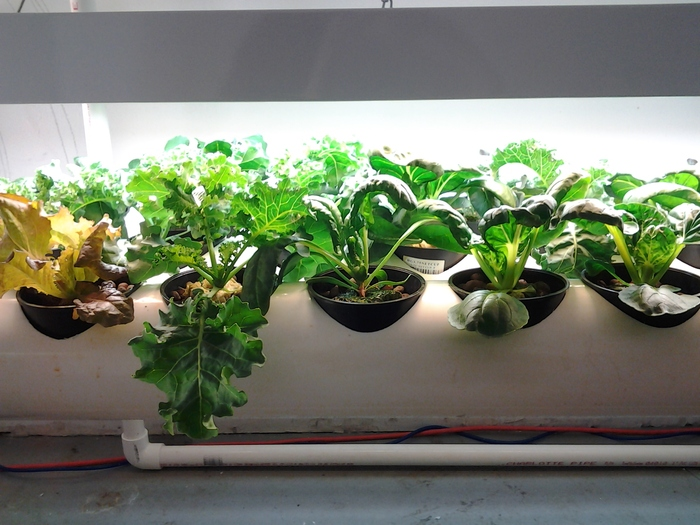 Grow Your Own!