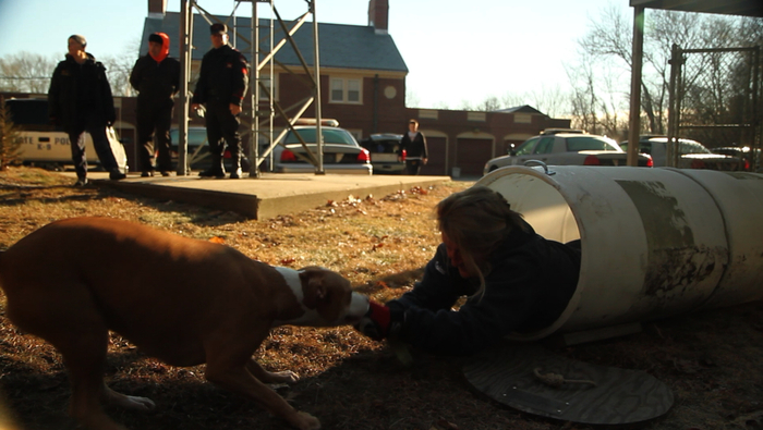Bark-barrrel training. Yes, pitbull terriers make talented search & rescue dogs!