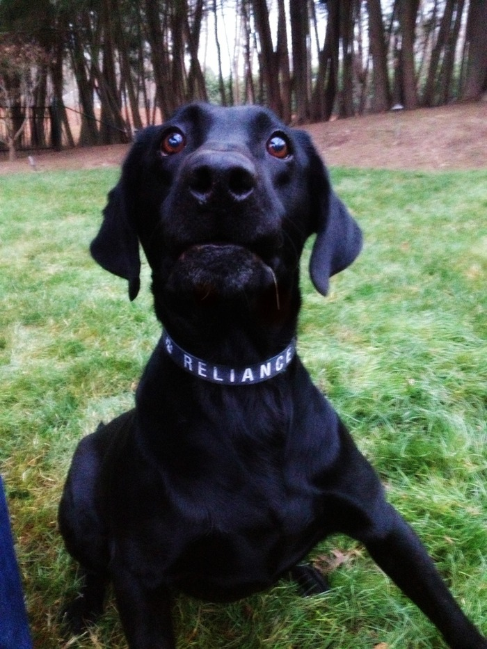 K9 Buster modeling our RELIANCE paw dog collar!