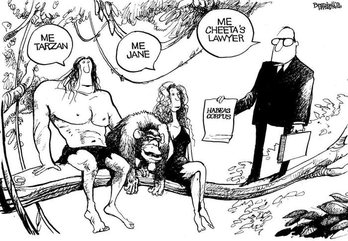 Bill Bramhall's NY Daily News cartoon inspired by Steve Wise's lawsuits