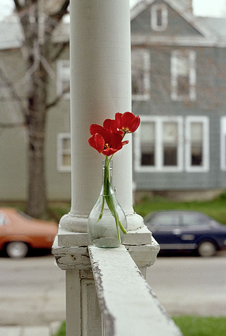 """Red Tulips, Indiana 1978 (8.5 x 11"""") (22 x 28 cm) and (24 x 30"""") (61 x 76 cm)"""