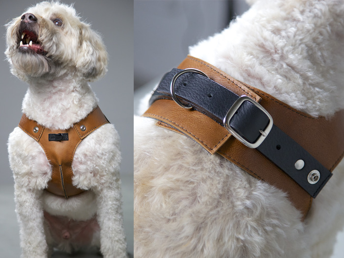 Chico modeling the harness.