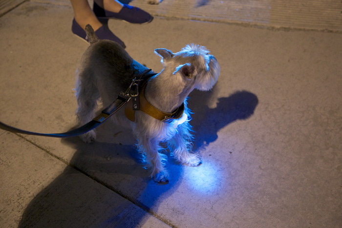 Light unit makes your doggie more visible at night.