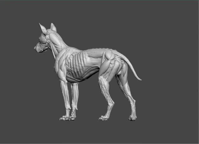 Canine Anatomy Sculpture by S  D  Lord — Kickstarter