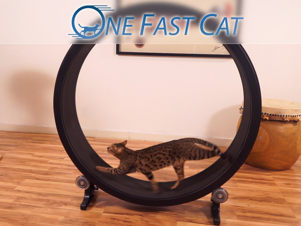 One Fast Cat - Exercise Wheel's video poster