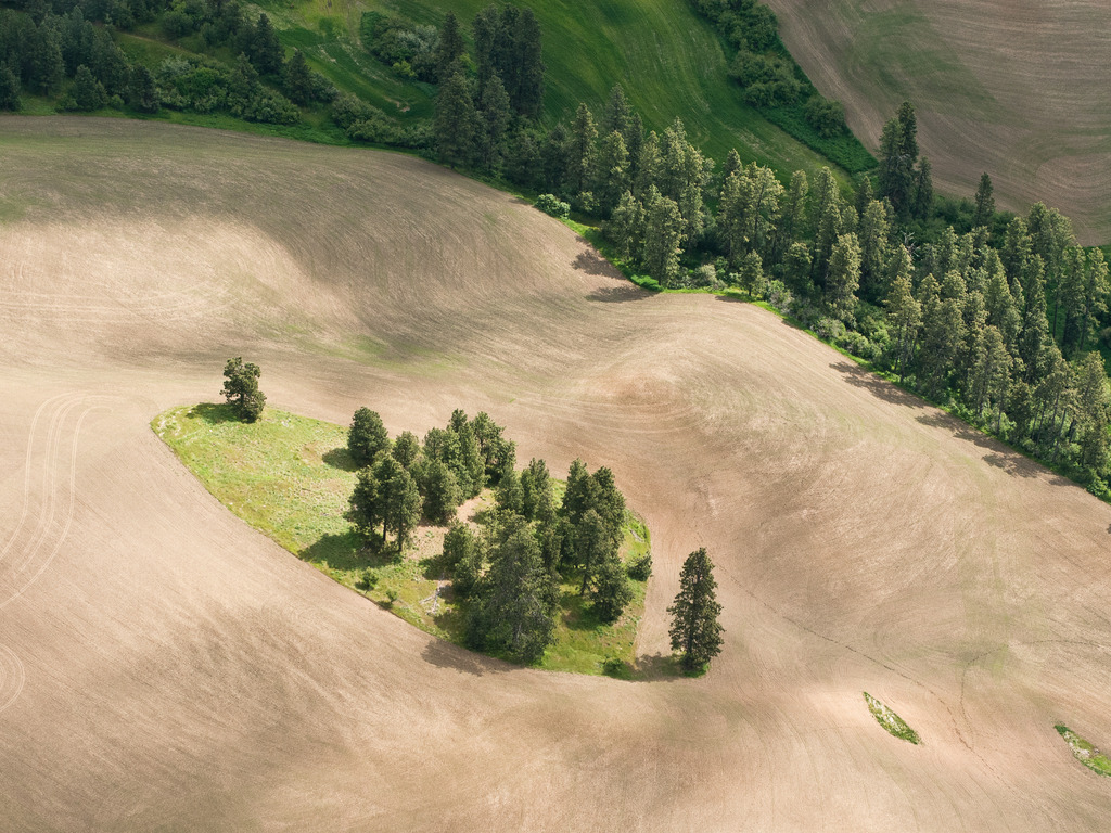Finding the Palouse Prairie: Images of A Vanishing Grassland's video poster