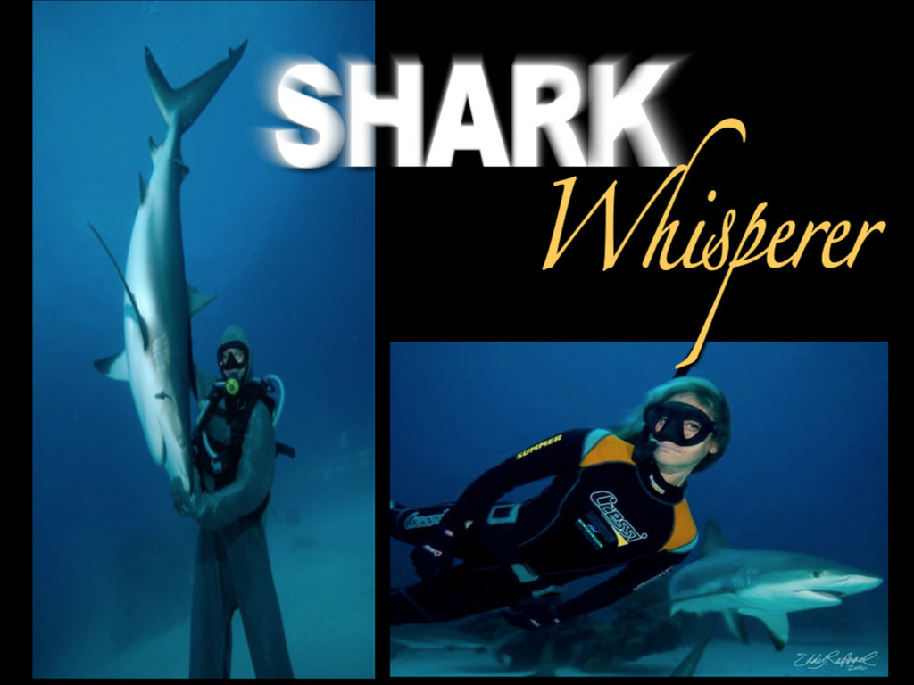 Shark Whisperer's video poster