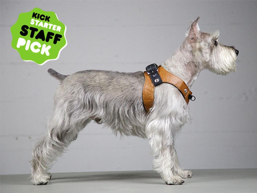 Deetach Dog Harness's video poster