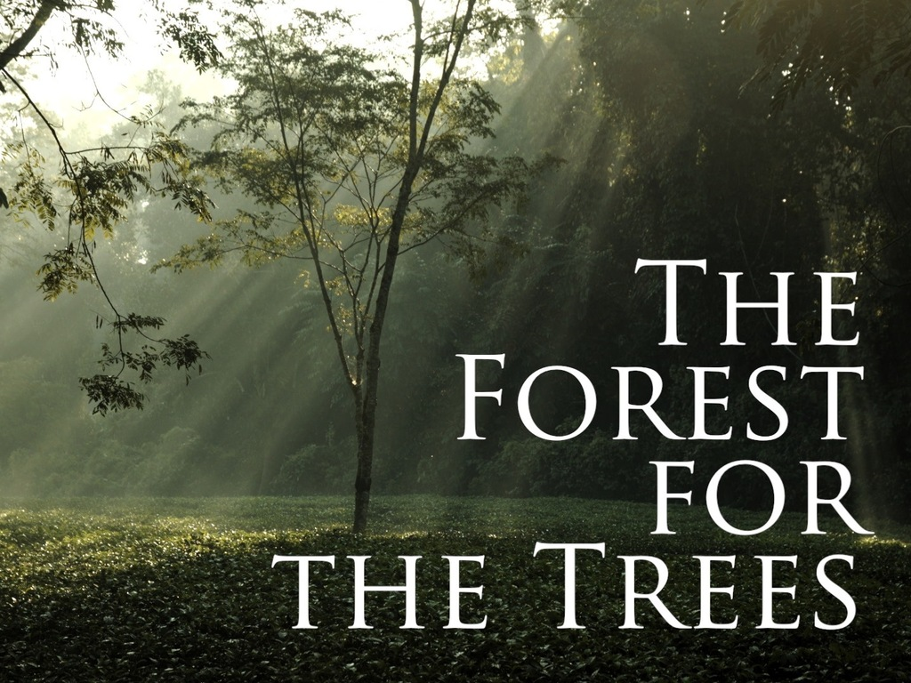 The Forest for the Trees's video poster