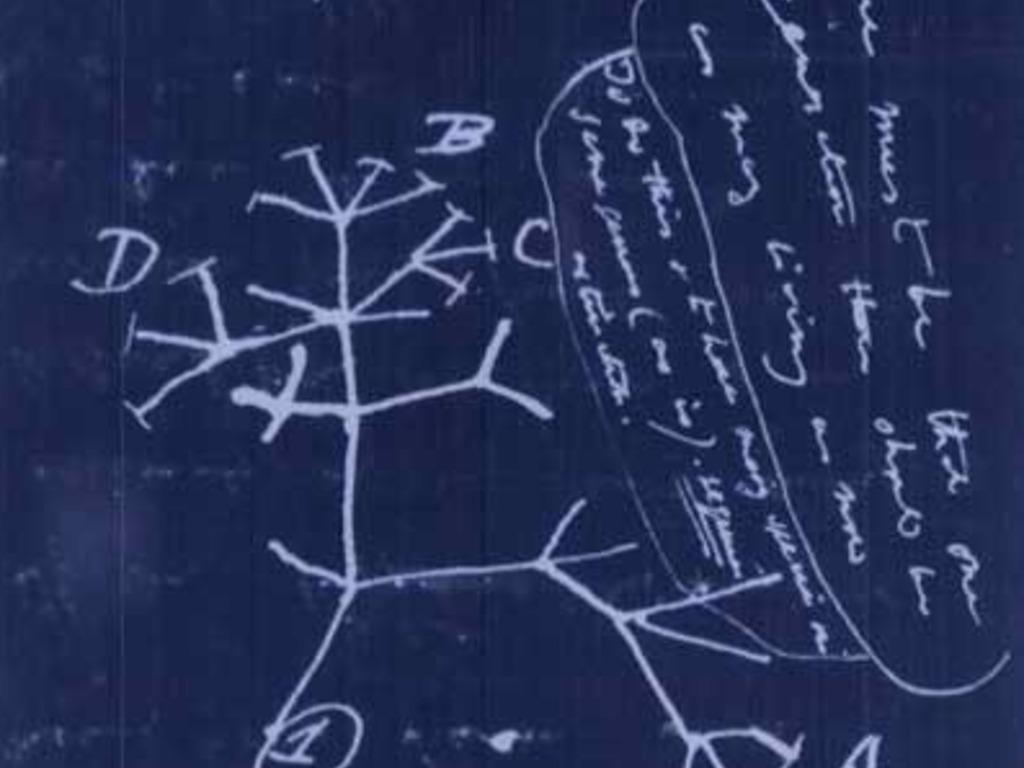 Illuminating the tree of life!'s video poster