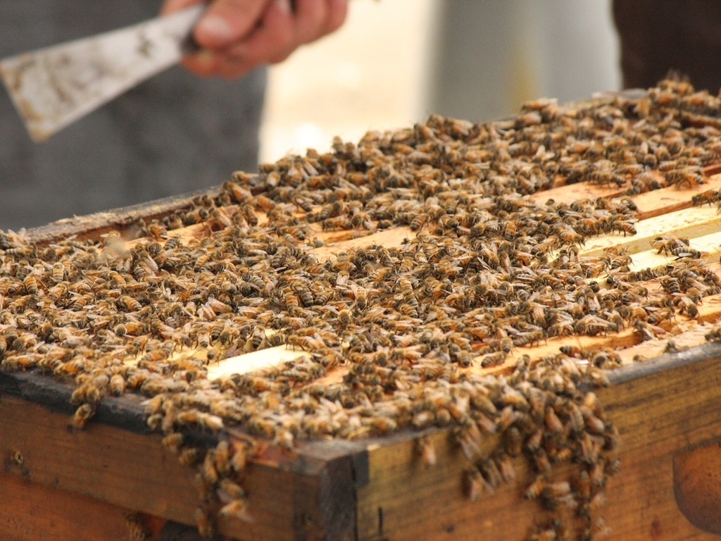 Helping the Honey Bees - Country Bee Colony Expansion's video poster