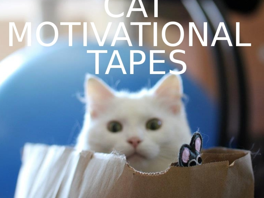 Cat Motivational Tapes.'s video poster