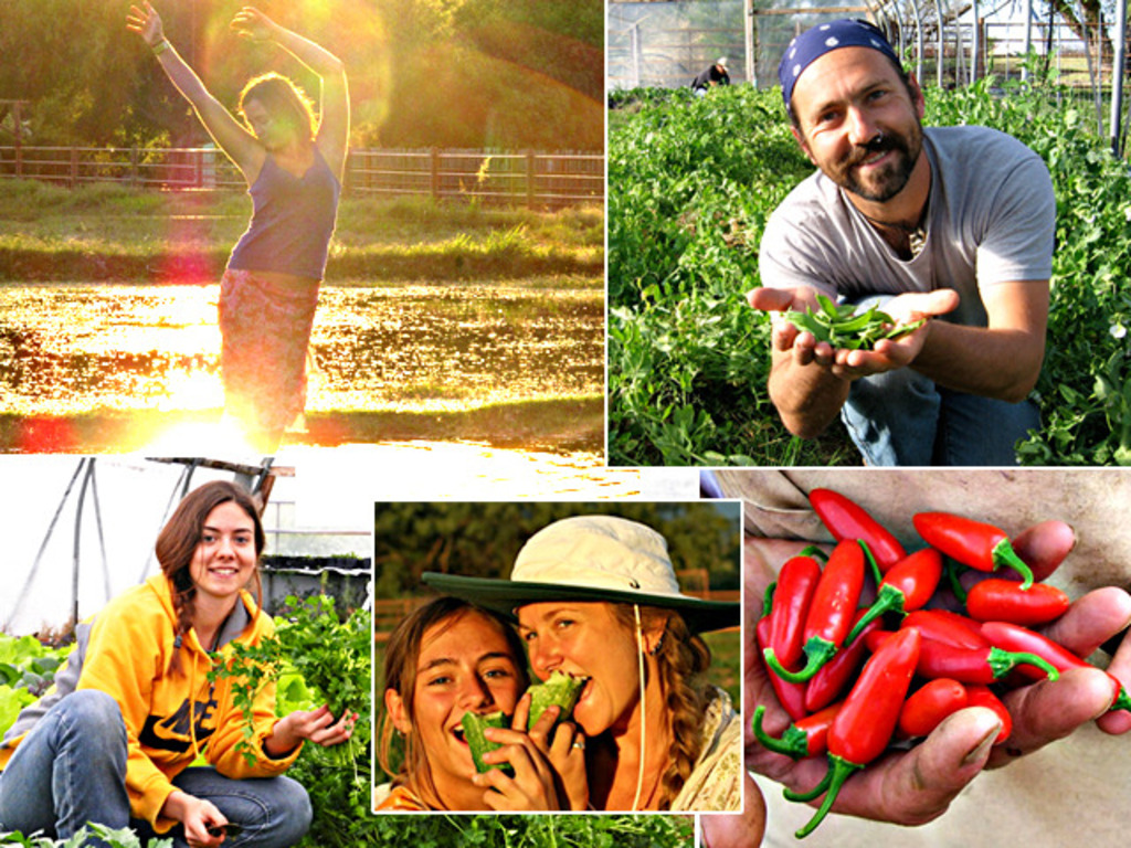 Earth Harmony Festival - Organic Food & Living's video poster